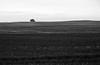 Riesenigel - Giant hedgehog (cammino5) Tags: pareidolie pareidolia igel hedgehog grosstresow deutschland germany ostsee balticsea rügen schwarzweis bw
