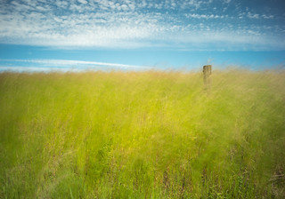 Grass, Wind and Sky in Palouse