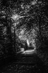 "fine art BW shot of delicious shade of a woodland walk on hot summers day, Dalgety Bay, Fife, Scotland (grumpybaldprof) Tags: bw blackwhite ""blackwhite"" ""blackandwhite"" noireetblanc monochrome""fineart"" ethereal striking artistic interpretation impressionist stylistic style contrast shadow bright dark black white illuminated ""dalgetybay"" dalgety fife scotland uk ""firthofforth"" forth firth ""forestwalk"" landscape trees branches leaves noiretblanc sunshinethroughleaves canon 7d ""canon7d"" tamron 16300 16300mm ""tamron16300mmf3563diiivcpzdb016"""