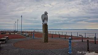 Bird on the  the Pier