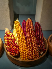 Some interesting corn at the museum in Chacas.