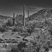 Sometimes It's Fun to Walk Around a Visitors Center and Explore the Nearby Views (Black & White, Saguaro National Park)