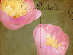 I will be the gladdest thing    Under the sun! (Nick Kenrick..) Tags: peony postcard