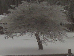 Frozen! (freddiewentworth) Tags: frozen snow winter ice icicles cold tranquil serene magical ohio tree outdoors nature landscape outside