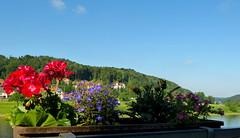 Durch die Blume (isajachevalier) Tags: blume blüte landschaft elbsandsteingebirge sächsischeschweiz rathen sachsen panasonicdmcfz150