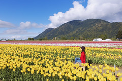 tulips festival chilliwack (yuanxizhou) Tags: flowerphotography nature wilderness field britishcolumbia vancouver portrait skymountain landscape flower tulips