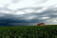 Shed in the Storm (Kyle-W) Tags: storm corn rain clouds canon t3i tokina 1116mm weather severe field thunderstorm iowa shed