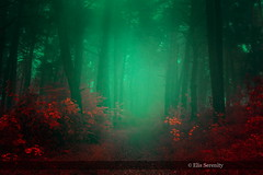 Forever Autumn (ElisSerenity) Tags: forest fog nature photo trip landscape life red tees