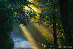 Road to a better world (z.dorighi) Tags: cisownica krajobraz promienie wschódsłońca landscape poland rays sun beam morning nice weather road trees wood forest early fog mist