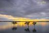 Shining Through (Beth Wode Photography) Tags: sunset dusk greyclouds mangroves trees 3trees reflections wellingtonpoint redlands beth wode bethwode