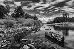 Low tide river - B&W version (der LichtKlicker) Tags: riegel2017 fluss riegel elz teningen river low tide niedrigwasser himmel wolken clouds cloudporn sky skyporn water wasser wood holz forest trees bushes büsche windy windig wind stones steine calm long exposure langzeitbelichtung haida nd gnd polarizer reflection reflexionen fujifilm fuji xt2 xf1024 tripod germany kaiserstuhl baden breisgau shore ufer