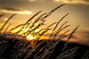Gras in Sunset (1 von 1)_DxO (Cugan) Tags: gras detail backlight gegenlicht sunset sonne sonnenuntergang himmel sky golden stillleben shiluette abend austria nö warm light nikon d3100 gentle sanft