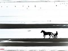 Le trotteur (MRI2009) Tags: cheval côtebelge merdunord mer plage nieuwpoort
