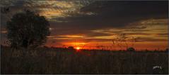 Bitesize Slices Of Sunrise. Part 7.. (Picture post.) Tags: landscape nature green sunrise silhouette clouds sunburst trees summertime paysage arbre