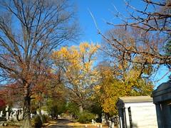 P1060621 (amiterangi1) Tags: woodlawncemetery autumn cemetery woodlawn
