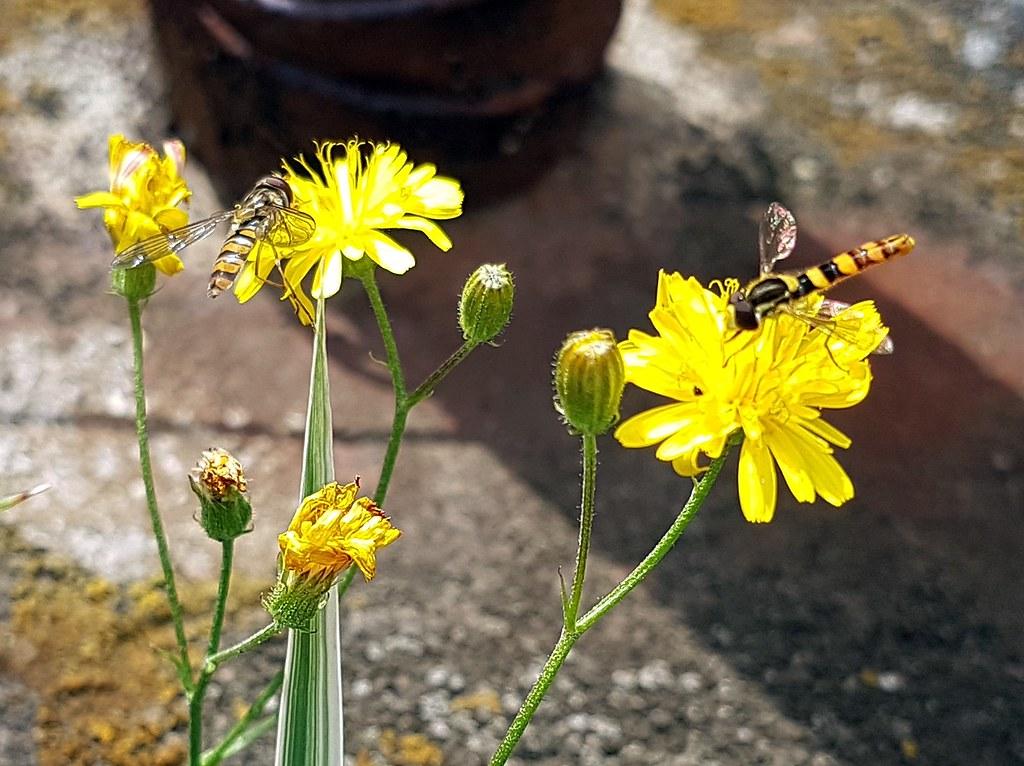 The world 39 s best photos of fliegen and natur flickr hive for Fliegen in blumen