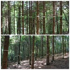 Eins und Alles, es kommt auf den Standpunkt an. (reipa59) Tags: bäume standpunkt striche einsundalles wald welzheim badenwürttemberg