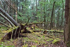 _MG_2002 copy (Bill Gagne Photography) Tags: spring april forest whitememorial whiteswoods green litchfieldcountyconnecticut litchfieldconnecticut tamronaf1750mmf28diiildaspherical tamron1750 colors color vscopresets vscofilmpresets canon canoneos50d moss billsphotos billgagnephotography