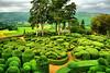 Les Jardins de Marqueyssac HDR (edwin van buuringen) Tags: lesjardinsdemarqueyssac france green jardin garden sonya7mii hdr dynamicphotohdr