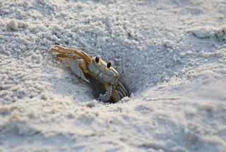Crabulous!!