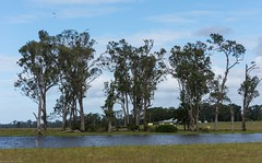Campbell's Lagoon (dustaway) Tags: landscape richmondvalley winter trees water waterscape lagoon campbellslagoon wetland myrtaceae eucalyptustereticornis forestredgum ian australiantrees australianlandscape