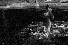 Can´t you see, i´m taking a bath (grundi1) Tags: sony alpha 68 ilca japanmakaken landskron kärnten carinthia sigma 1770 f2845 dc macro schwarzweis scharz weis black white bw blackandwhite