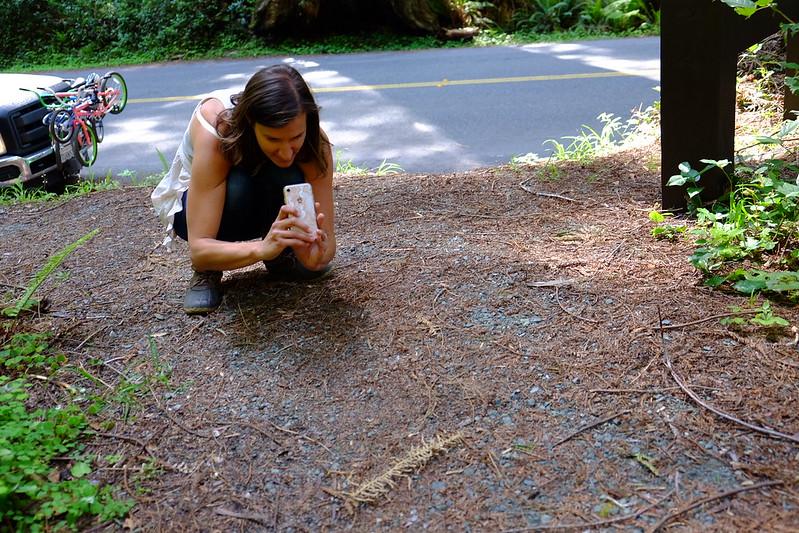 Blog Redwood National Park