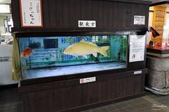 170330b4753 (allalright999) Tags: canon powershot g1x japan nagasaki shimabara 日本 長崎 島原 station train