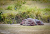 Hyppos resting... (GearUp Photography) Tags: africa hyppo safari ngorongoro hyppopothamus nature sleeping xt2 fujifilm animal wildlife incredible tarangire animals tanzania manyara serengeti amazing xf100400