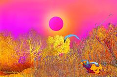 PLAYING WITH NATURE. (Viktor Manuel 990.) Tags: surrealism surrealista nature naturaleza brightcolors coloresbrillantes digitalart artedigital g querétaro méxico victormanuelgómezg