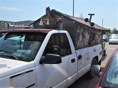 bark off ! (roaddragon305) Tags: chevy truck pickup camper custom dog labrador truckstop ontario
