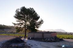 Bodega Cooperativa de Castalla-104