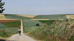 On the Camino. (France-♥) Tags: 930 espagne españa route chemin camino champs fields chemindecompostelle green vert caminodesantiago paysage landscape fabuleuse