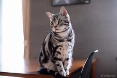 _DSC8469 (catfish.boogie) Tags: nikond750 nikkor50mmf18g japan hokkaido cat