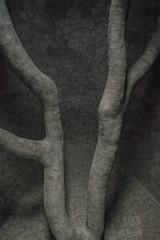 Tree Fall (Harry2010) Tags: treefall andygoldsworthy sanfrancisco publicart presidio