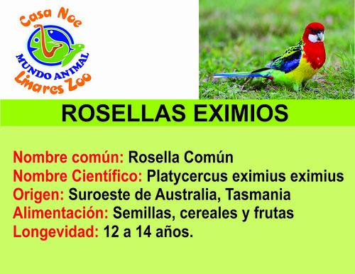 Rosellas eximios