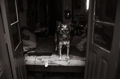 Foto- Arô Ribeiro -3124 (Arô Ribeiro) Tags: brasil photography laphotographie blackwhitephotos pb dog cachorro art arte kevindrummnot arôribeiro