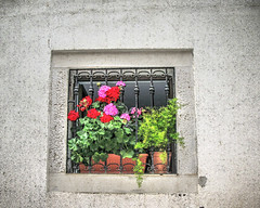 flower window (E>mar) Tags: flowers window croatia ruby3
