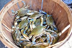 Feeling a little crabby (lauren3838 photography) Tags: laurensphotography lauren3838photography crabbing crabs crabpicking tilghmanisland tilghman easternshore maryland md chesapeakebay talbotcounty bushelofcrabs crabby crab watermen seafood nature nikon dogwoodharbor d750 fx tamron2875mm