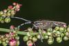 bug on buds (joolz70) Tags: nikon d200 105mm dg sigma nature outdoors macro