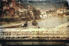Looking at the river (vittorio.chiampan) Tags: bird fineart art cityscape river italy verona