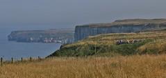 RSPB Bempton Cliffs (nick.linda) Tags: rspbbemptoncliffs northsea cliffface seabirds landscape seascape viewingplatform viewpoint eastyorkshire canon600d canonef70300lens