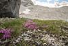 expo-8347 (ernst.scherr) Tags: rot adamekhütte gosau dachstein salzkammergut gletscher schnee natur mondaufgang mondlicht sonnenuntergang alpen pflanzen