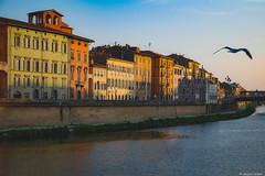 Pisa (Alessio Catelli) Tags: pisa tuscany toscana piazza dei miracoli river arno travel city tourism sunset sun tramonto italy italia fuji xe1 xf1855