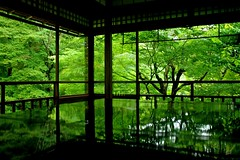 Green Reflection (tez-guitar) Tags: window green summer temple architect reflection reflections kyoto pentax pentaxart sigma