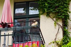DSC_9853-47 (kytetiger) Tags: berlin scheunenviertel rosenthaler str rabbit