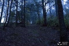 Santuario de las luciérnagas (Adolfo Montes) Tags: santuariodelasluciérnagas nanacamilpa tlaxcala luciérnagas nikon méxico