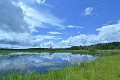 Central Wisconsin wetlands (stevelamb007) Tags: wisconsin necedah wetlands reflection pond water clouds stevelamb nikon d7200 tokina 1116mmf28