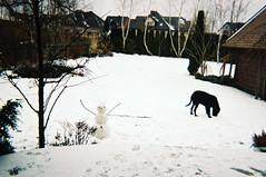 Not quite right (joanna.smieja) Tags: dog snowman snow winter backyard seasons nature kodak analog analogue disposablecamera
