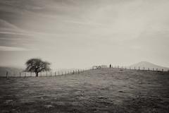 Muga (joxelu.) Tags: bn baztan argia canon collado contraluz navarra nafarroa naturaleza nature montaña mendia montagne minimal monocromático